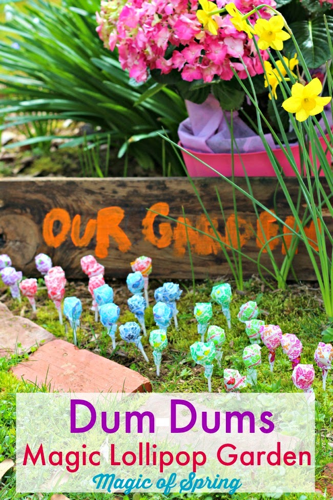 Planting Jelly Beans- Jelly Beans and Dum Dums for Easter Magic Garden