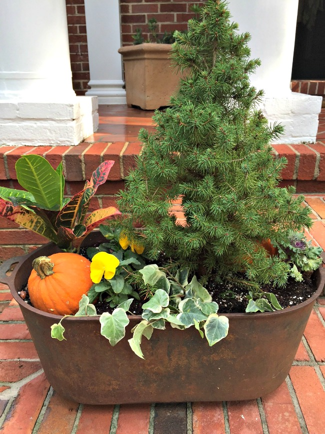 pumpkin-in-planters