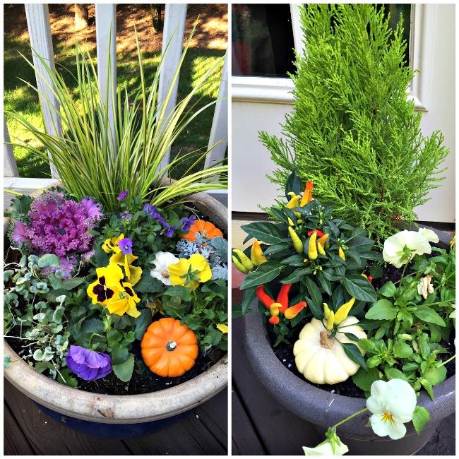 pumpkin-planters