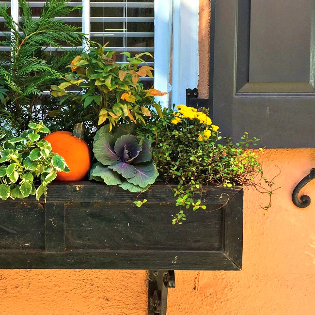 pumpkin-window-box
