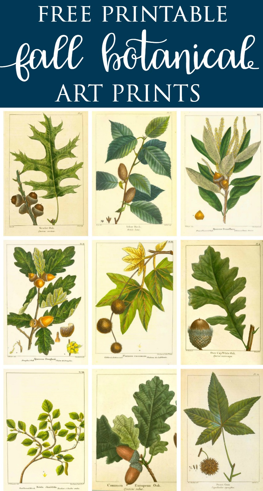 Free Printable Vintage Botanical Prints
