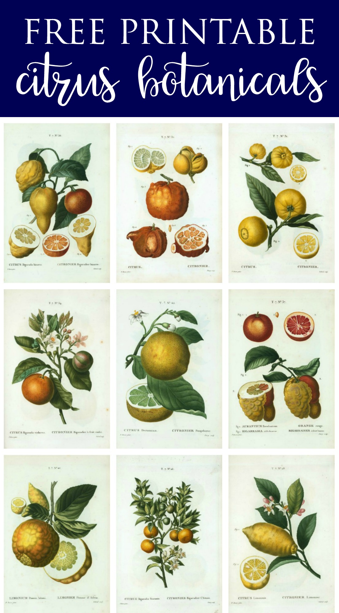 Spring Botanical Art